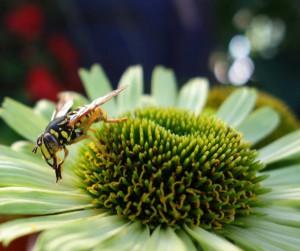 bee living
